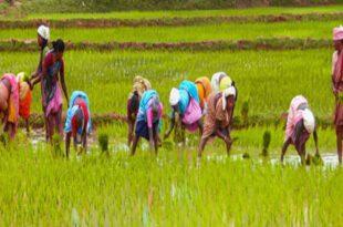 krishi-agriculture-youknow-kerala-india